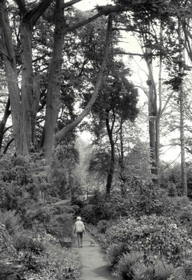 Picture of Ventnor Botanic Gardens with original planting from the time of the RNVH before the 1987 storm.